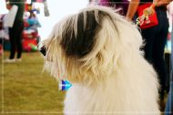 Expomascotas_IMG_7468